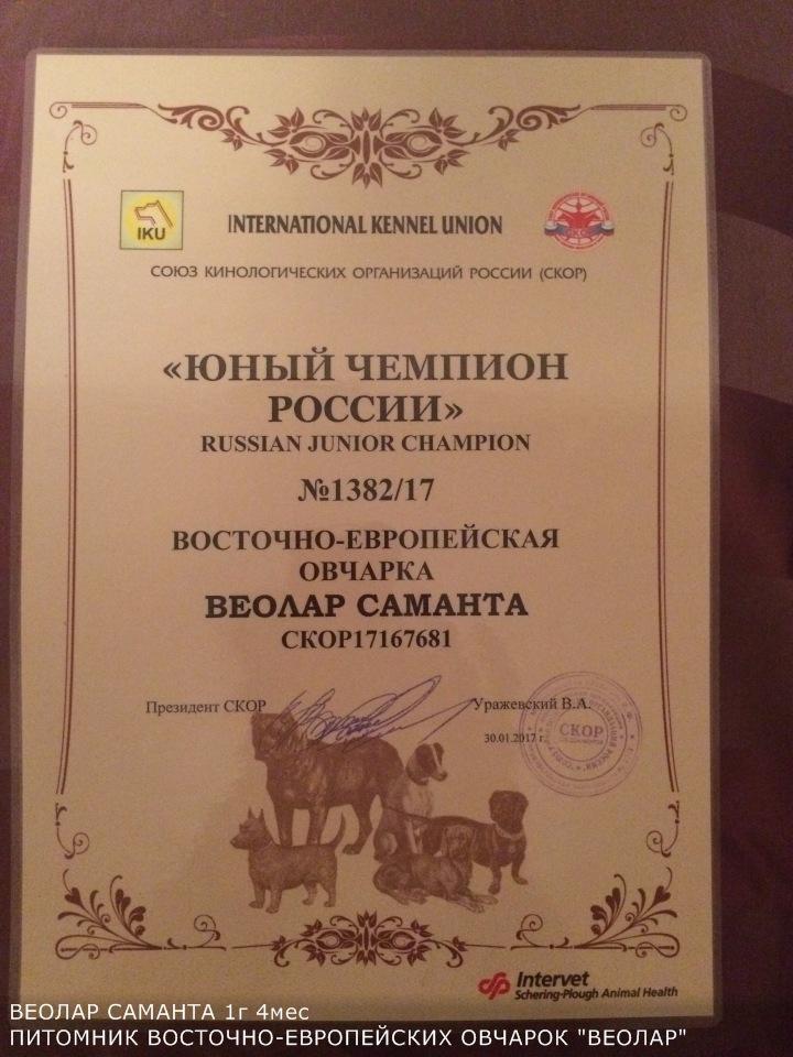 ВОСТОЧНО-ЕВРОПЕЙСКАЯ ОВЧАРКА ВЕОЛАР САМАНТА - Страница 4 02563c62cc65