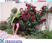 наши домашние цветники - Страница 2 B16d2064e873t