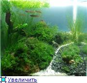 Мои аквариумы. 2f74b39197f4t