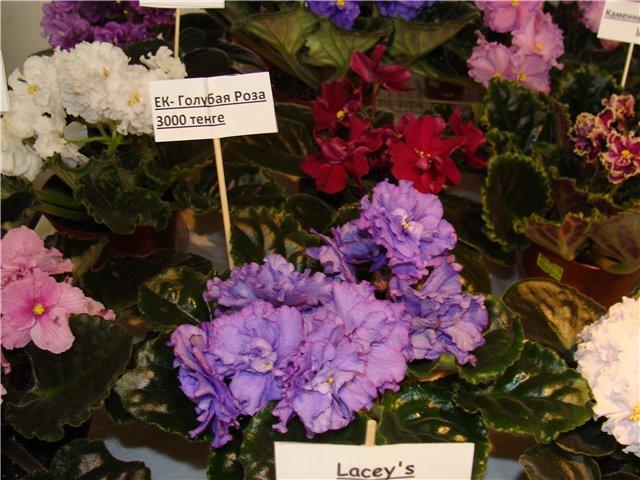 Международая выставка «Цветы.Ландшафт .Усадьба 2010» Астана - Страница 4 E2bfe1b39afc