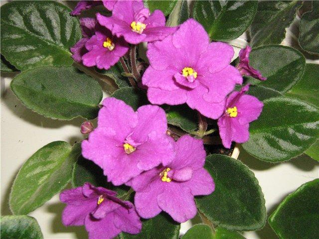 Моё цветочное богатство 100c393be236