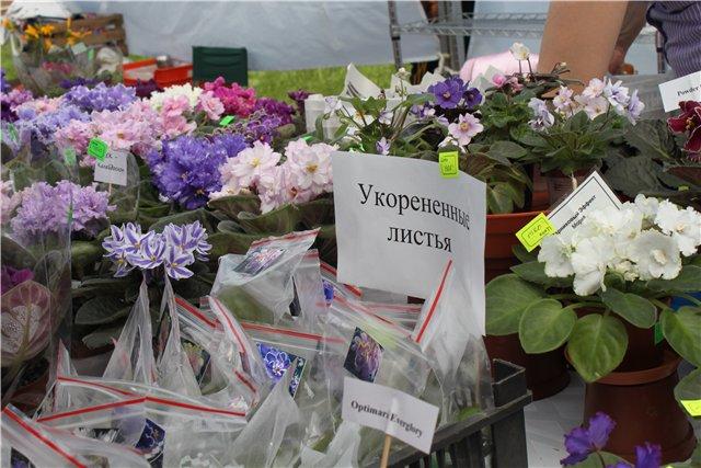 Фестиваль цветов в Алматы - «Алматы – гул кала» 5079be9c4382