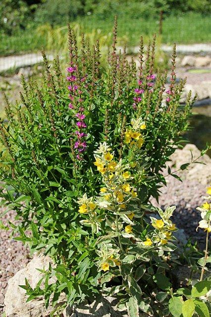 Экскурсия по Ботаническому Саду 83a3ddc65d60