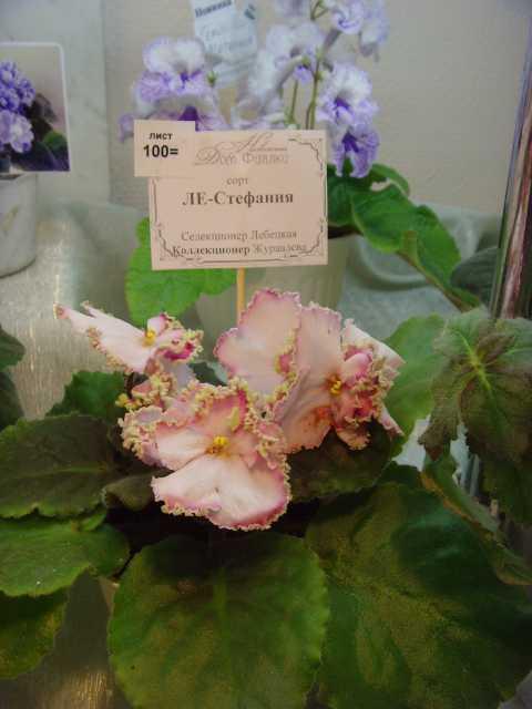 Октябрь 2011. Выставка в НДФ в СПб. Cb3da6b0c418