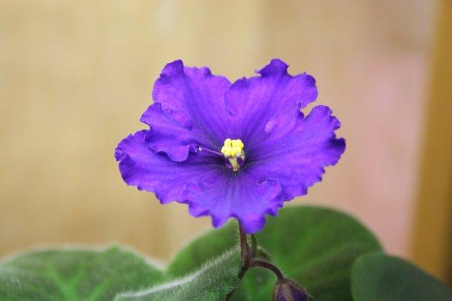Растения от FILIGERa - Страница 12 584b82721aa3