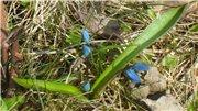 Весна идёт... - Страница 2 E0056e4b6fd1t