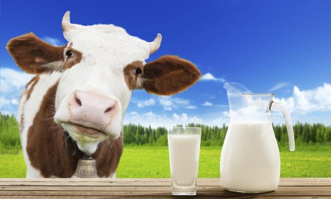 No beban tanta leche o evitenla del todo Leche-vaca