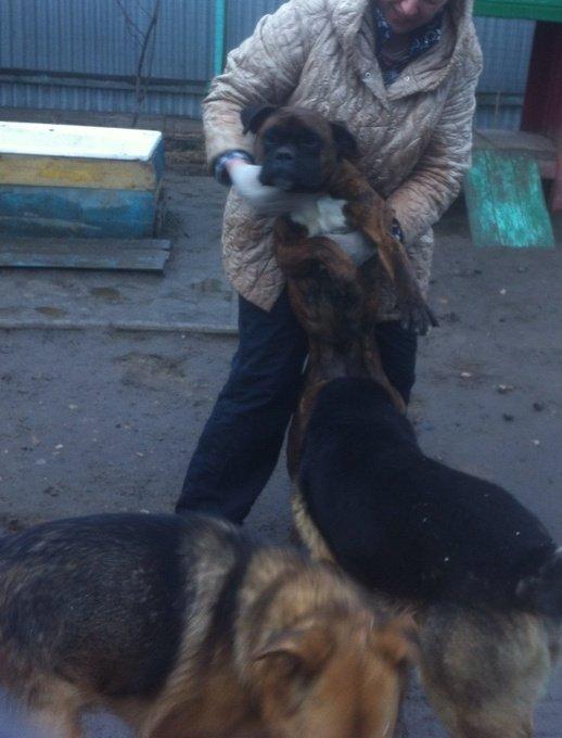 Москва, Джесс, сука, д.р. 19.04.2013 26e37b629da1