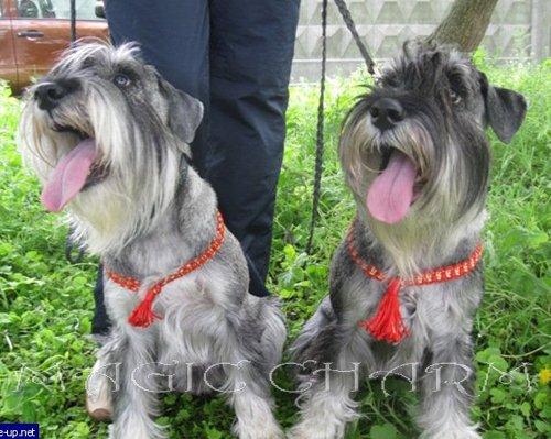 Magic Charm - ошейники, обереги, украшения и аксессуары для собак 19f5c386396e