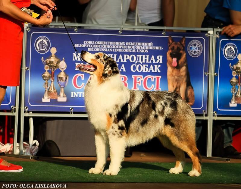 Выставочные успехи наших собак - 5 - Страница 30 0896559e1ed4