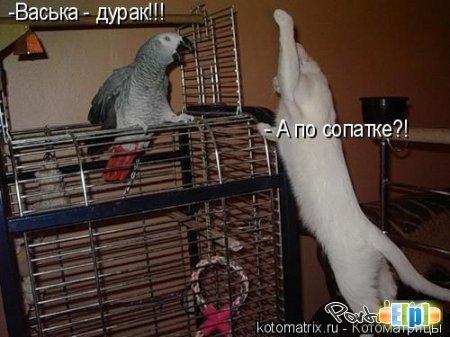 Смешные картинки 4fae54dbb7ea