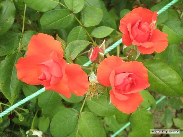 Крым. Никитский ботанический сад. 481e8bdc70b8