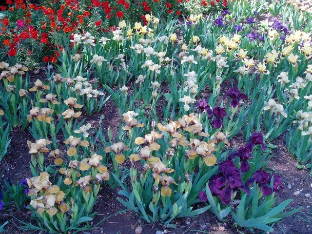 Крым. Никитский ботанический сад. 5466d8b613e3