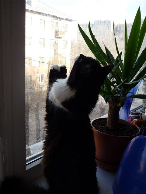 Хочу похвалиться котятами D6814eda45ac
