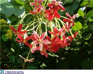 Орхидеи и прочая красота на о. Пхукет - Страница 2 Ef0a95628f26t