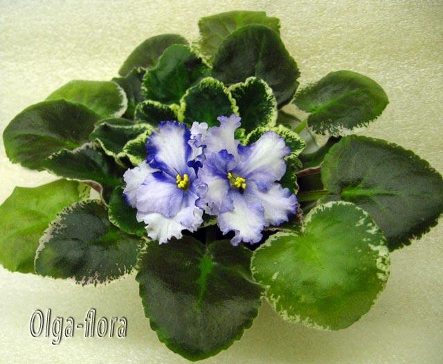 Lavender Swirls (S.Sorano)  58ce05f1adab