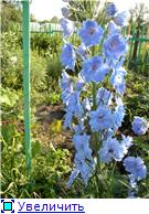 Лето в наших садах - Страница 4 7108a10dab06t