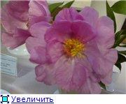 Выставки Accbd53381b1t