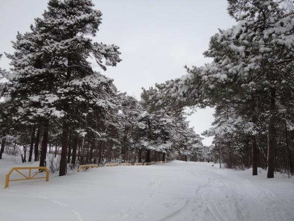 Зимняя сказка на наших фотографиях - Страница 14 18bca405d725