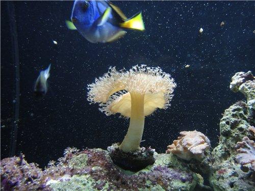 Десять популярных аквариумов мира Db091ef416ca