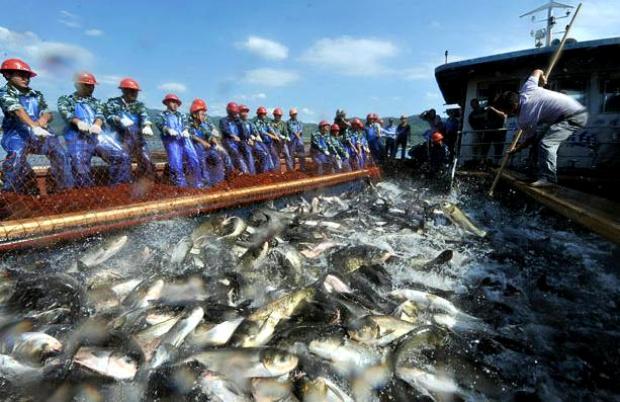Озеро Циндаоху.Летающие рыбы 97ce9f1b5586