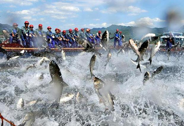 Озеро Циндаоху.Летающие рыбы A6058d54e0b1