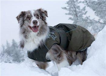 Интернет-зоомагазин Red Dog: только качественные товары для собак и кошек! F83e4d98c80f