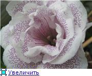 Семена глоксиний и стрептокарпусов почтой - Страница 8 C0f5853342cft
