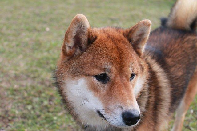 Недельные курсы повышения квалификации для собакообожак :-) Приглашаем всех!!! - Страница 3 Fec49fdfb20d
