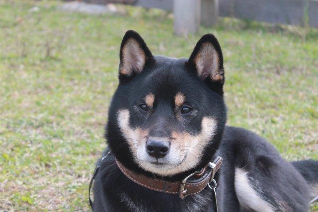 Недельные курсы повышения квалификации для собакообожак :-) Приглашаем всех!!! - Страница 3 78947f197f52