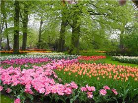 Рай тюльпанов или Кёкнхов - 2012 De0d0283122ct