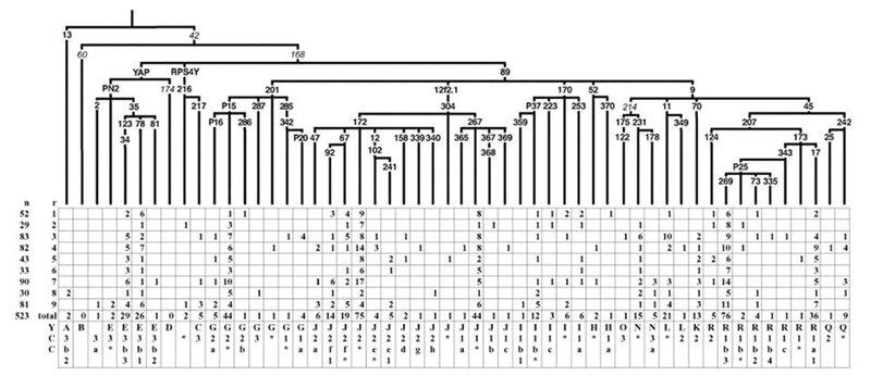 ДНК данные турков. 88557135a9f1