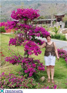 Бугенвиллея (Bougainvillea) - Страница 2 7c27c9420edat