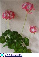 Продам цветущие фиалки и детки, эписции, глоксиии, сортовые герани, сингониум и др. - Страница 3 D41967c9979ct
