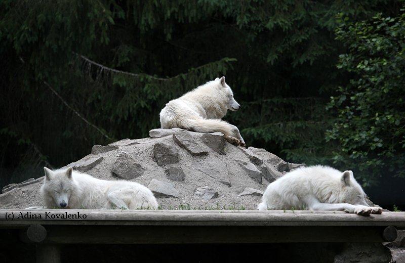 Швейцарский зоопарк 16330a679b5c