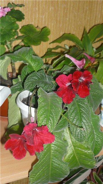 Мои любимые цветочки - Страница 2 Fe617b516949