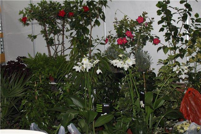 XIX Международная выставка Ландшафт и Приусадебное хозяйство-2012 C06115d71e44