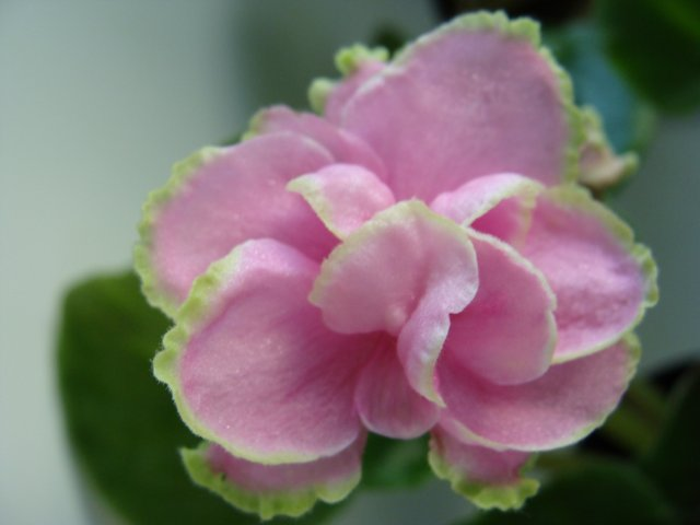 Мои цветочки B180bf49deaf