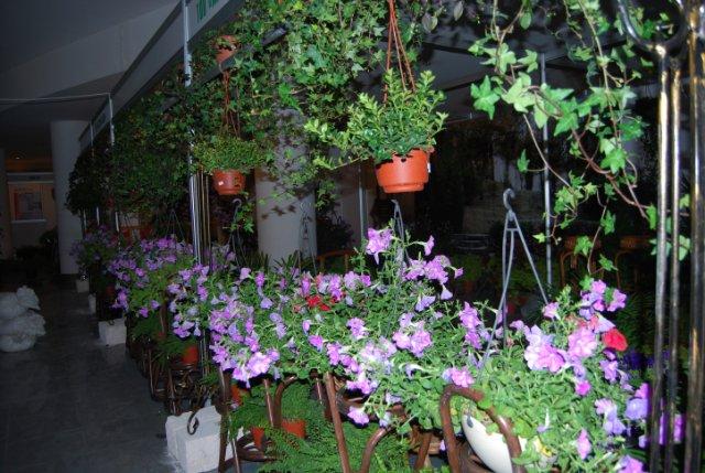 Международая выставка «Цветы.Ландшафт .Усадьба 2010» Астана - Страница 2 85af14acf7ee