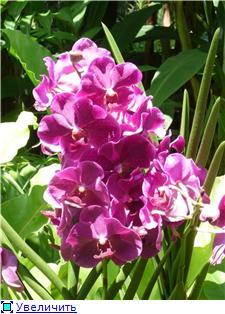 Парк орхидей в Ботаническом саду Сингапура. 65c22664d085t