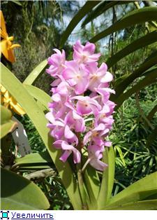 Парк орхидей в Ботаническом саду Сингапура. 08f100dac6a5t