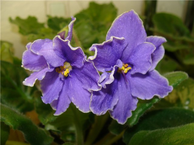 Весеннее  цветение (Хваст от Веры) - Страница 7 E8e1ae5103e0