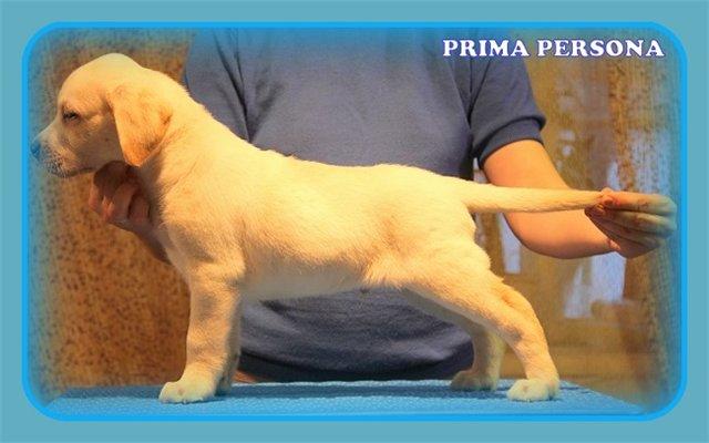 """Питомник """"Прима Персона"""". Мои собаки-моя жизнь! - Страница 2 D6ddfb60045a"""