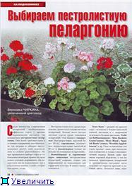 Пеларгонии - Страница 23 780901367f77t