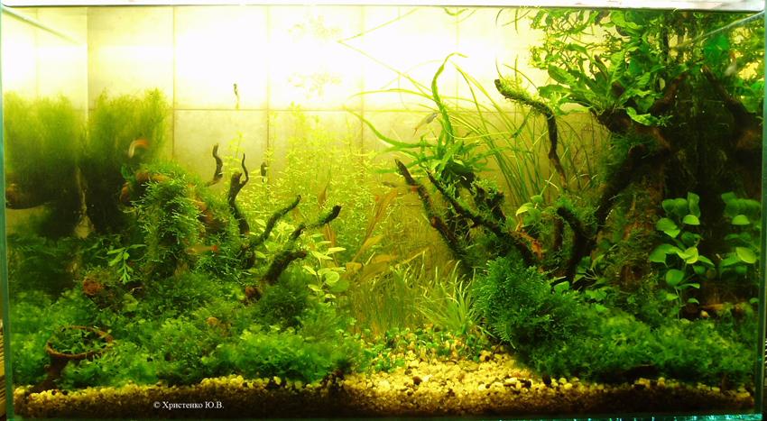 """Как родился аквариум """"Луч света"""" 5a11a9a4e25b"""