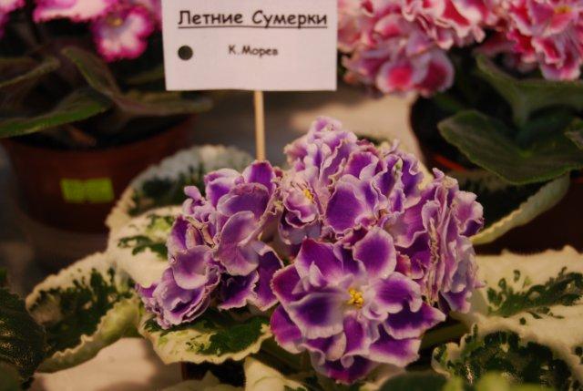 Международая выставка «Цветы.Ландшафт .Усадьба 2010» Астана - Страница 3 C55de328fda3
