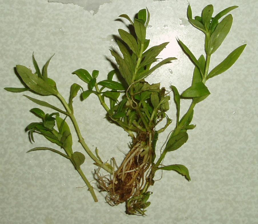 Новые или редкие растения 600acde5d707
