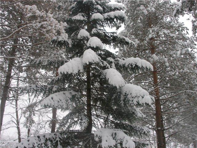 """""""Зимушка, зима...."""" 58705a1ba914"""