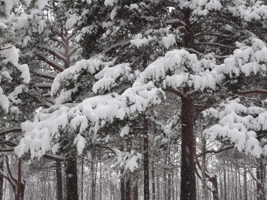 Зимняя сказка на наших фотографиях - Страница 14 7098dd878ae6
