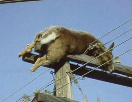 Trinidad, Colorado (USA) Le 8 Août 2011. 14373225mutilations-animales-6-jpg
